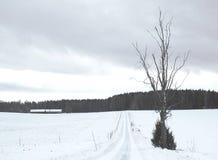 Απλές χιονώδεις διαδρομές ελαστικών αυτοκινήτου - πορτρέτο Στοκ φωτογραφία με δικαίωμα ελεύθερης χρήσης