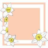 Απλή ευχετήρια κάρτα με τα λουλούδια daffodil Στοκ εικόνα με δικαίωμα ελεύθερης χρήσης