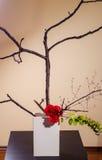 Απλή ρύθμιση ikebana Στοκ Εικόνες