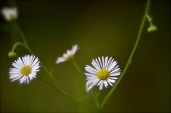 Απλή τέχνη στη φύση Στοκ φωτογραφία με δικαίωμα ελεύθερης χρήσης