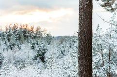 Απλός όμορφος ο νέος Στοκ Εικόνες