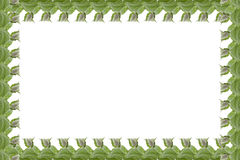 Απλό πλαίσιο των φύλλων μεντών που απομονώνεται στο άσπρο υπόβαθρο Στοκ Εικόνες