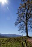 Απλό τοπίο δέντρων όρμων Cades Στοκ εικόνα με δικαίωμα ελεύθερης χρήσης