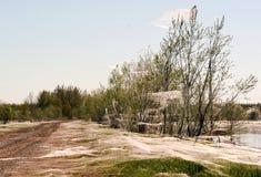 Αράχνες και η οικογένεια στους Ιστούς στα δέντρα κοντά στη λίμνη Σιβηρία Ρωσία στοκ φωτογραφία με δικαίωμα ελεύθερης χρήσης