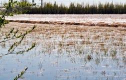 Αράχνες και Ιστοί στην ξηρά χλόη κοντά στη λίμνη Σιβηρία Ρωσία στοκ εικόνες