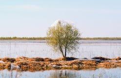 Αράχνες και οικογένεια στους ιστούς αράχνης σε ένα δέντρο κοντά στη λίμνη Σιβηρία Ρωσία στοκ εικόνες