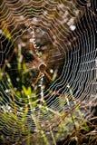 αράχνες κρησφύγετων Στοκ εικόνα με δικαίωμα ελεύθερης χρήσης