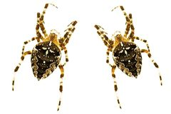 αράχνες Στοκ φωτογραφίες με δικαίωμα ελεύθερης χρήσης