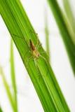 αράχνες Στοκ Φωτογραφία
