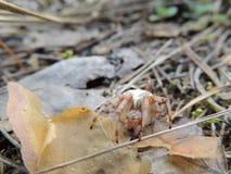 αράχνες Στοκ Εικόνες