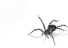 αράχνη απεικόνισης Στοκ εικόνα με δικαίωμα ελεύθερης χρήσης