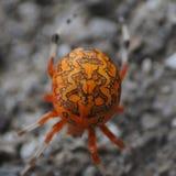 Αράχνη αποκριών Στοκ εικόνες με δικαίωμα ελεύθερης χρήσης