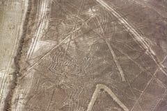 Αράχνη γραμμών Nazca Στοκ φωτογραφία με δικαίωμα ελεύθερης χρήσης