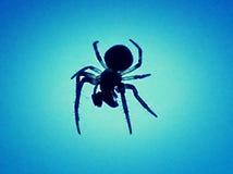 Αράχνη εντόμων στοκ εικόνες