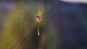 Αράχνη Ιστού Στοκ Φωτογραφίες