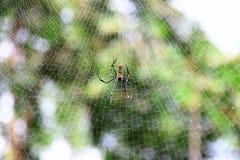 Αράχνη, ιστός αράχνης Στοκ Εικόνες