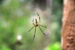 Αράχνη, ιστός αράχνης Στοκ φωτογραφία με δικαίωμα ελεύθερης χρήσης