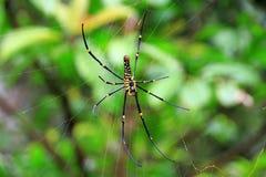 Αράχνη, ιστός αράχνης Στοκ Φωτογραφίες