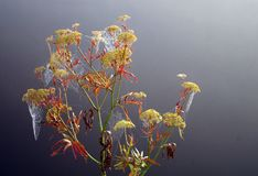 Αράχνη-Ιστός Στοκ Φωτογραφία