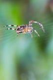Αράχνη κήπων Στοκ φωτογραφίες με δικαίωμα ελεύθερης χρήσης