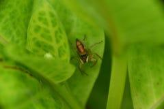 αράχνη κήπων Στοκ Φωτογραφίες
