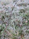 Αράχνη καθαρή με τη δροσιά, Λιθουανία στοκ εικόνες