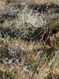 Αράχνη καθαρή με τη δροσιά πρωινού, Λιθουανία στοκ εικόνα με δικαίωμα ελεύθερης χρήσης