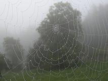 Αράχνη καθαρή Στοκ εικόνα με δικαίωμα ελεύθερης χρήσης