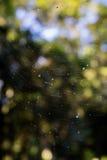 Αράχνη καθαρή Στοκ εικόνες με δικαίωμα ελεύθερης χρήσης
