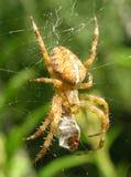 Αράχνη και θύμα Στοκ φωτογραφία με δικαίωμα ελεύθερης χρήσης