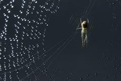 Αράχνη και Ιστός Ιστός αράχνης και δροσιά πρωινού Να λάμψει πτώσεις νερού στο spiderweb Στοκ εικόνες με δικαίωμα ελεύθερης χρήσης