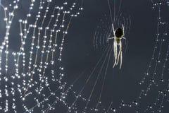 Αράχνη και Ιστός Ιστός αράχνης και δροσιά πρωινού Να λάμψει πτώσεις νερού στο spiderweb Γκρίζα ανασκόπηση Στοκ Φωτογραφίες