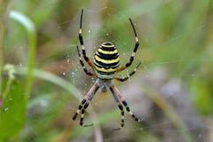 Αράχνη και Ιστός Στοκ φωτογραφία με δικαίωμα ελεύθερης χρήσης