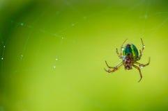 Αράχνη και Ιστός Στοκ εικόνες με δικαίωμα ελεύθερης χρήσης