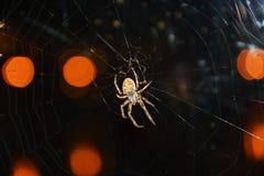 Αράχνη και σημεία του φωτός Στοκ Εικόνες