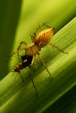 αράχνη καμπιών Στοκ φωτογραφία με δικαίωμα ελεύθερης χρήσης