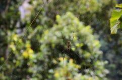 Αράχνη κινηματογραφήσεων σε πρώτο πλάνο σε έναν Ιστό Στοκ Φωτογραφία