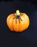 αράχνη κολοκύθας Στοκ εικόνες με δικαίωμα ελεύθερης χρήσης