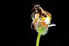 Αράχνη κυνηγών στοκ εικόνα