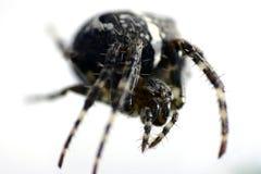 αράχνη λεπτομέρειας Στοκ εικόνα με δικαίωμα ελεύθερης χρήσης