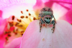 αράχνη λουλουδιών Στοκ Εικόνες