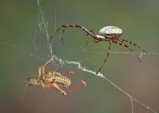 Αράχνη μετά από τη χοάνη Στοκ φωτογραφία με δικαίωμα ελεύθερης χρήσης