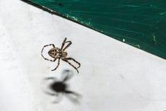 Αράχνη με έναν ιστό αράχνης στο υπόβαθρο ενός άσπρου αντικειμένου τη νύχτα στοκ φωτογραφία με δικαίωμα ελεύθερης χρήσης