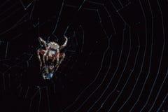 Αράχνη με το έντομο Στοκ Εικόνες