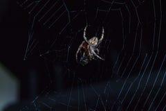 Αράχνη με το έντομο Στοκ φωτογραφία με δικαίωμα ελεύθερης χρήσης