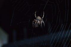 Αράχνη με το έντομο Στοκ εικόνα με δικαίωμα ελεύθερης χρήσης