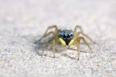 αράχνη μικροσκοπική Στοκ φωτογραφίες με δικαίωμα ελεύθερης χρήσης