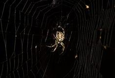 αράχνη νύχτας Στοκ εικόνα με δικαίωμα ελεύθερης χρήσης