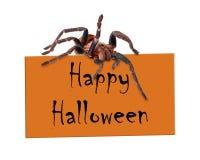 Αράχνη πέρα από το ευτυχές σημάδι αποκριών Στοκ Εικόνες
