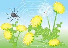 αράχνη πικραλίδων κινούμεν ελεύθερη απεικόνιση δικαιώματος